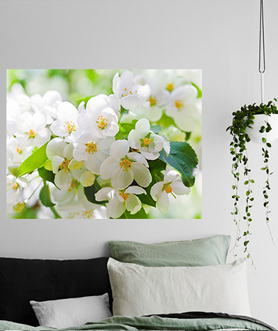 vinilos decorativo Fotomural White Flowers